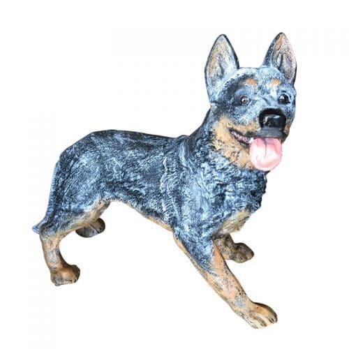Australian cattle dog standing